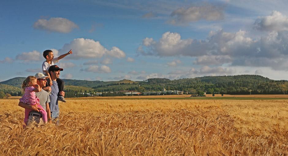 Hay Silage Straw Field Crops