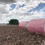 Two Pink bales